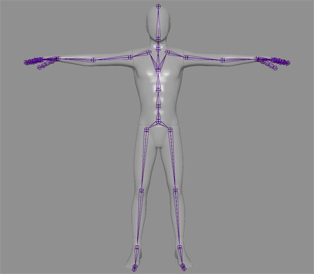 Skeletal View.